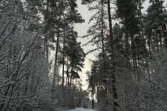 moelln-im-winter-01