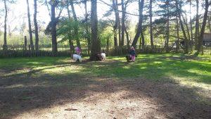 Ziegengehege im Naturparkzentrum Uhlenkolk